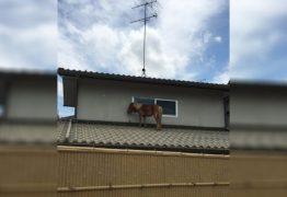 Égua sumida por 3 dias depois de enchente é encontrada em telhado