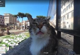 VEJA VÍDEO: Gatinho vira estrela de imagens do Google Street View em ruínas de Roma