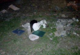 Matança de gatos em condomínio próximo a CEHAP revolta população de João Pessoa