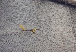 Crocodilo nada com 'macarrão de piscina' no sul da Flórida