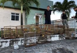 OPERAÇÃO ROTA SEGURA: Polícia Militar prende suspeitos de tráfico de drogas e crime ambiental