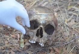 ACHADO MACABRO: Cachorro encontra crânio humano na zona rural de Cajazeiras