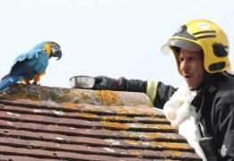 'Vai se fu***!',  dispara arara para bombeiro que tentava resgatá-la – VEJA VÍDEO