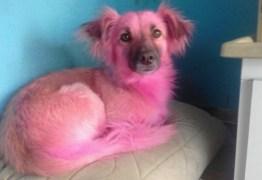'Vó' usa shampoo errado e deixa cãozinho rosa