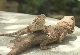 'Museu de répteis' na PB tem mais de 300 animais e conta com espécies exóticas