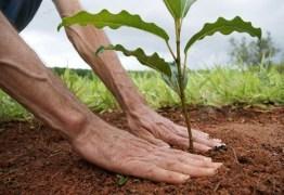Energisa realiza ação para marcar o Dia Mundial da Árvore