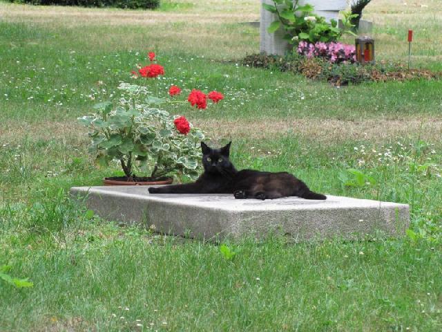 cemiterio de animais 03 - MERCADO DA MORTE: Saiba tudo sobre o pioneiro cemitério para animais na Paraíba