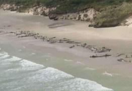 Quase 200 baleias morreram encalhadas na Nova Zelândia: VEJA VÍDEO