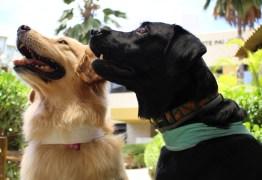 Focinhos solidários têm ajudado no tratamento de crianças por meio de cães-terapeutas