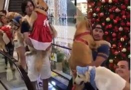 Pet Weekend dá 'passe livre' para passeio com bichinhos de estimação no Mangabeira Shopping – VEJA VÍDEO