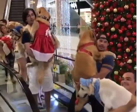PET WEEKEND - Pet Weekend dá 'passe livre' para passeio com bichinhos de estimação no Mangabeira Shopping - VEJA VÍDEO