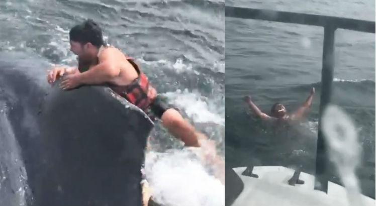 baleia - Pescador pula no mar para salvar baleia enroscada em corda