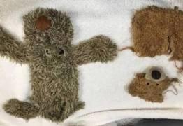 Veterinários tiram ursos de pelúcia inteiros do estômago de labrador