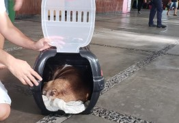 NA PARAÍBA: cachorro morre após empresa negar viagem em ônibus e colocá-lo no maleiro – VEJA VÍDEO