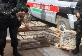 Polícia apreende veados campeiros, canários e mais de 500 arribaçãs abatidas no Sertão