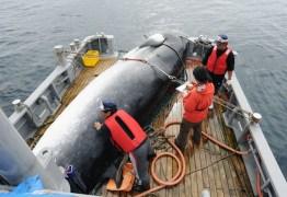 Japão deixa comissão que protege baleias e anuncia volta da caça comercial