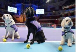 'Cãodulas' roubam a cena e substituem boleiros humanos em torneio de tênis em Londres