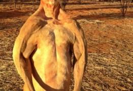 Morre canguru mais forte do mundo
