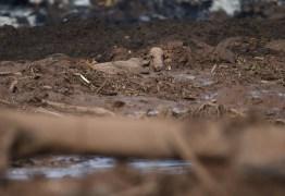 Justiça bloqueia R$ 6 bilhões da Vale após rompimento de barragem em Brumadinho
