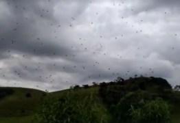 'Chuva de aranhas' assusta moradores no sul de Minas – VEJA VÍDEO