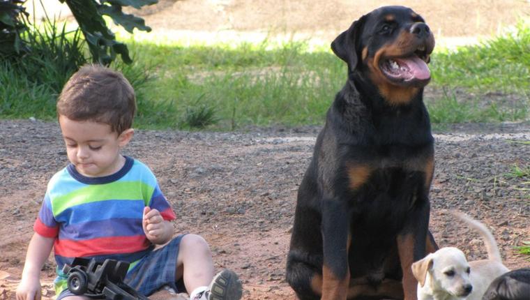 cão slava criança capa - Garotinho de 5 anos passa mal enquanto mãe dorme e cachorro da família salva vida da criança