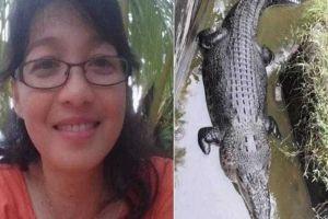 crocodilo 300x200 - Crocodilo de cinco metros devora cientista que tentava alimentá-lo