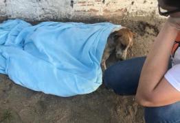 Cachorro mutilado em Santa Rita morre em clínica veterinária