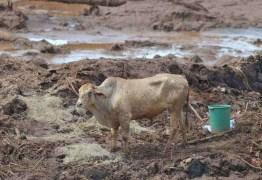 Vale deu remédio vencido para animais em Brumadinho, diz Ibama