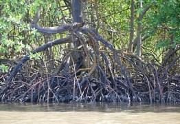 Corpo de homem é encontrado no mangue do Porto do Capim