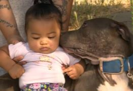 Pitbull salva vida de bebê ao arrastá-la pela fralda durante incêndio