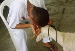 POR UNANIMIDADE: STF confirma validade do sacrifício de animais em cultos religiosos