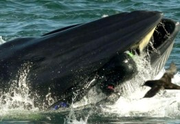 Homem sobrevive após ser parcialmente engolido por baleia – VEJA VÍDEO