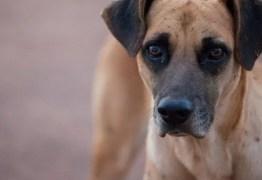 Prefeitura de Sousa convoca reunião para averiguar denúncia sobre maus-tratos a animais
