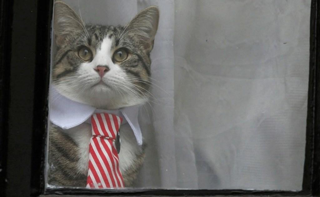 gato 1024x632 - Gato de Assange está em segurança, diz WikiLeaks