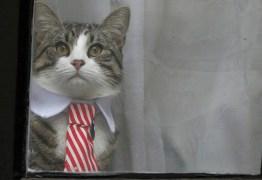 Gato de Assange está em segurança, diz WikiLeaks