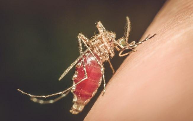 mosquito malária - Venezuelana é internada com malária no Hospital Universitário