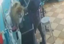 MAUS TRATOS: Funcionária é flagrada agredindo cachorro em pet shop; VEJA VÍDEO