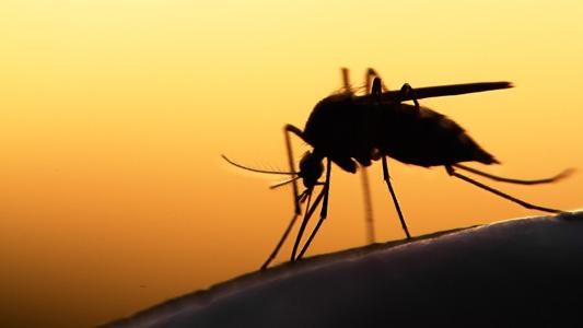 Hospital Universitário Lauro Wanderley registra 16º caso de malária
