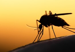 Hospital Universitário regista 13º caso de malária