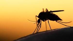 malaria mosquito ms interna 300x169 - DOENÇA: Confirmado 12° caso de malária na Paraíba
