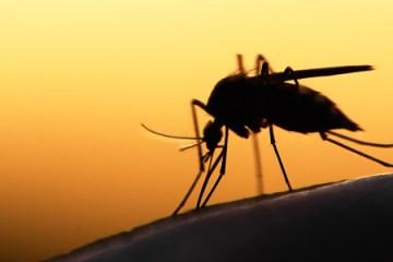 malaria mosquito ms interna - DOENÇA: Confirmado 12° caso de malária na Paraíba