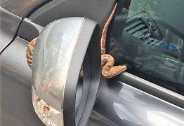 Assaltante joga cobra viva em cima de vítima para roubar carro