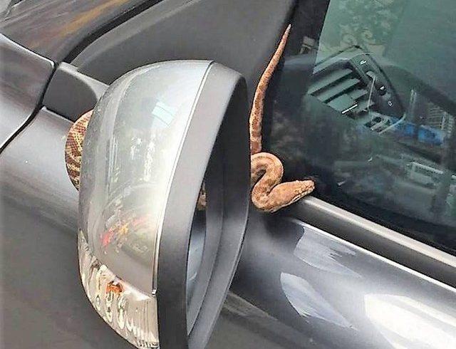 cobra carro2 640x490 - Assaltante joga cobra viva em cima de vítima para roubar carro