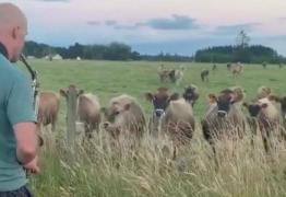 Vacas são atraídas por homem tocando saxofone e vídeo viraliza; VEJA VÍDEO
