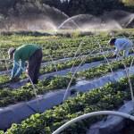 1089294 vcapto abr 2408172792 1 - ELEIÇÕES 2020: Maior parte dos candidatos na Paraíba são agricultores – VEJA RELAÇÃO