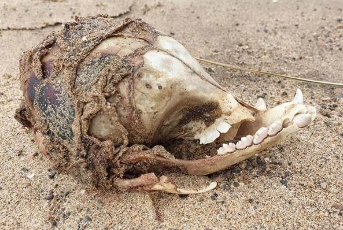 1 foto 12787360 - Caveira de 'ET' é encontrada em uma praia e assusta internautas; confira