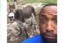 Homem 'canta' com burro música tema do Rei Leão e viraliza nas redes sociais – VEJA VÍDEO