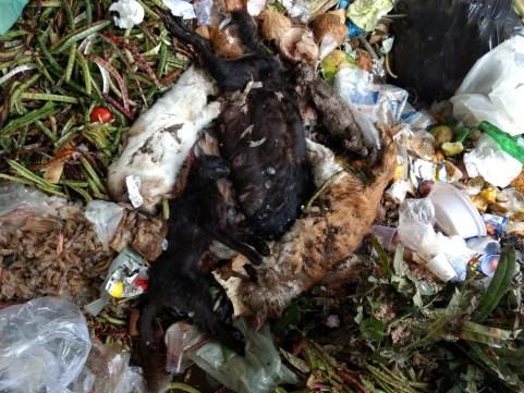 WhatsApp Image 2019 08 03 at 13.25.23 300x225 - SUPOSTO ENVENENAMENTO: animais são encontrados mortos em lixo do Mercado da Torre, em JP; VEJA VÍDEOS