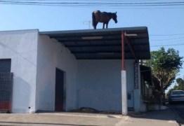 Cavalos sobem em telhados e são resgatados por guinchos – VEJA VÍDEO
