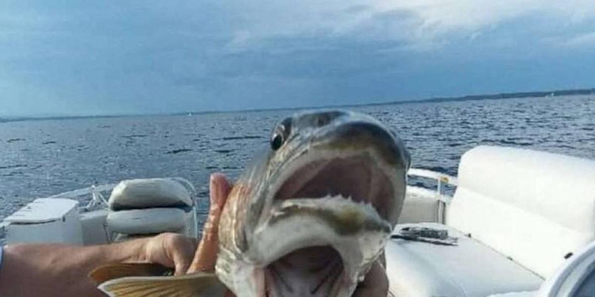 fish01asht190821 3a81ed3c15513c8263599830d0ed12f9 1200x600 - Mulher se surpreende ao pegar peixe de duas bocas em lago